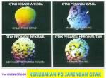 Otak pengguna
